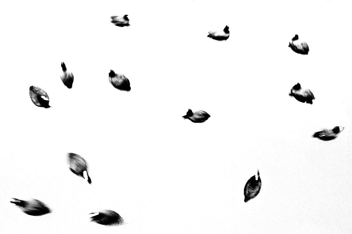 Bruxelles, Belgique. 2008 - Jean-François Spricigo - FLAIR Galerie