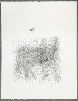 Ceci est un taureau. 2016 - Lucio Fanti - FLAIR Galerie