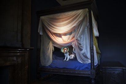 The dog in the Château d'Azay-le-Rideau. 2010 - Nicolas Guilbert - FLAIR Galerie