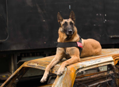 Mystic, Belgian Shepherd, 2 and a half years old, fire dog, Seine Saint-Denis. 2018 - Charlotte Dumas - FLAIR Galerie