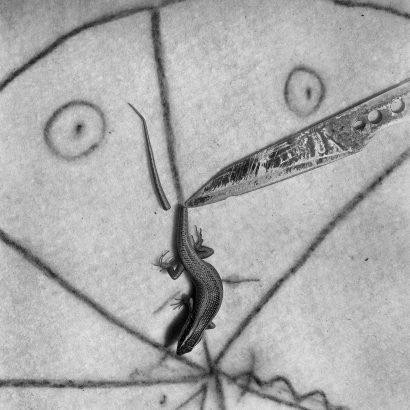 Sliced. 2007 - Roger Ballen - FLAIR Galerie